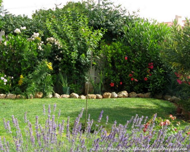 Mara's garden