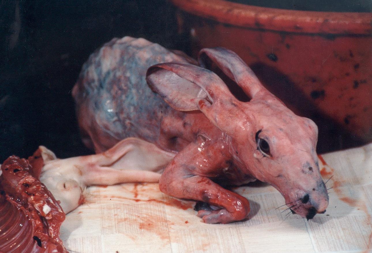 Risultati immagini per ALLEVAMENTO ANIMALI                         PER PELLICCIA IMMAGINI