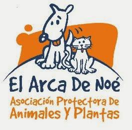 ARCA DE NOE ALBACETE