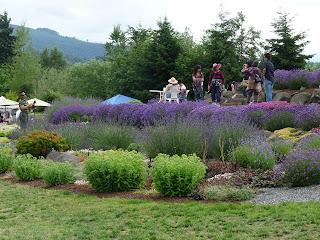Sequim Lavender Rock Garden