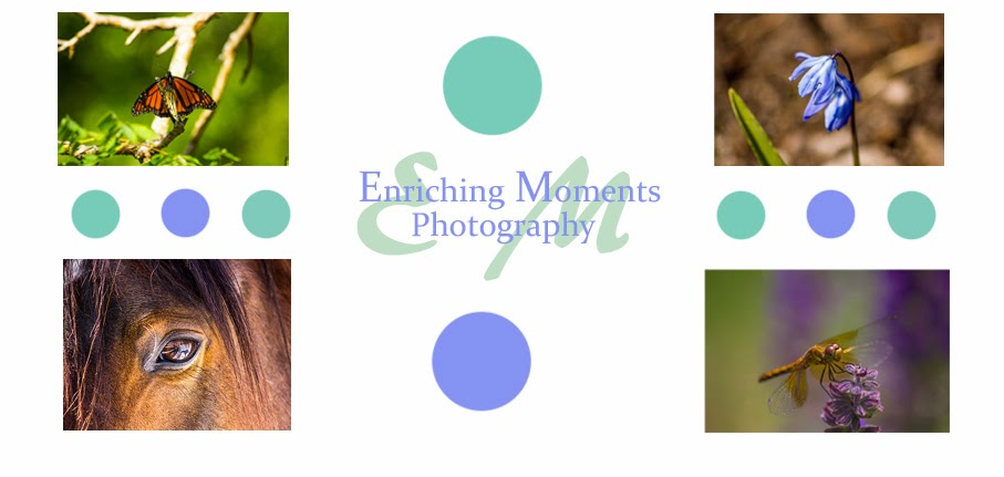 Enriching Moments Photography