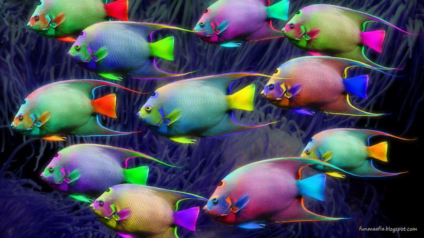 Смотреть один на один с рыбкой 7 фотография