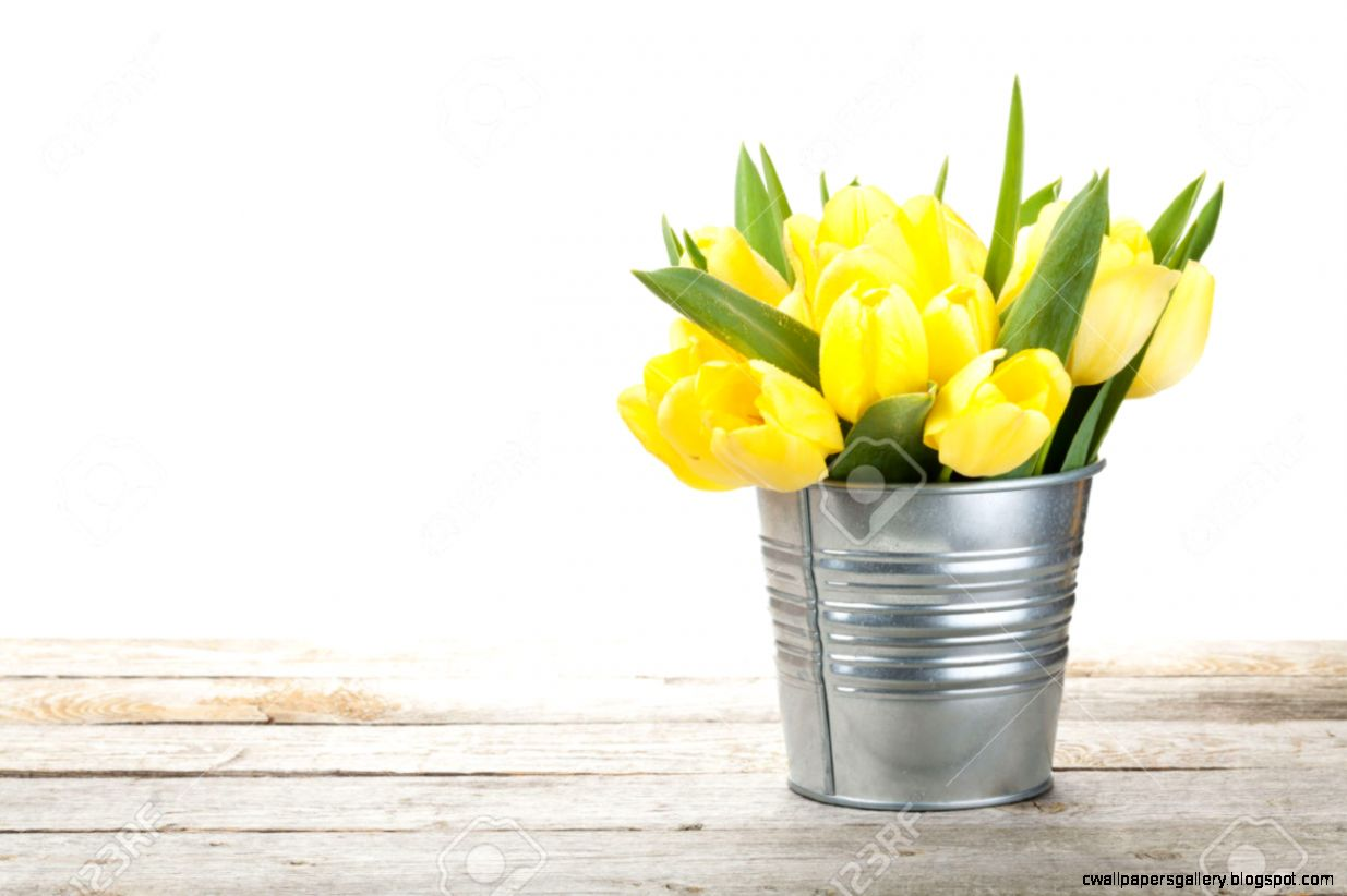 Fresh Yellow Tulips Bouquet Over Wooden Table Isolated On White