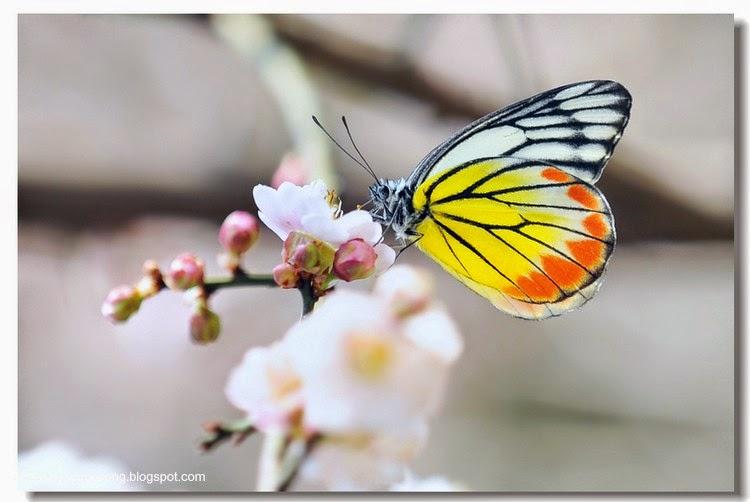 Con bướm xuân 7