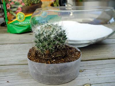 DIY cactus dish garden