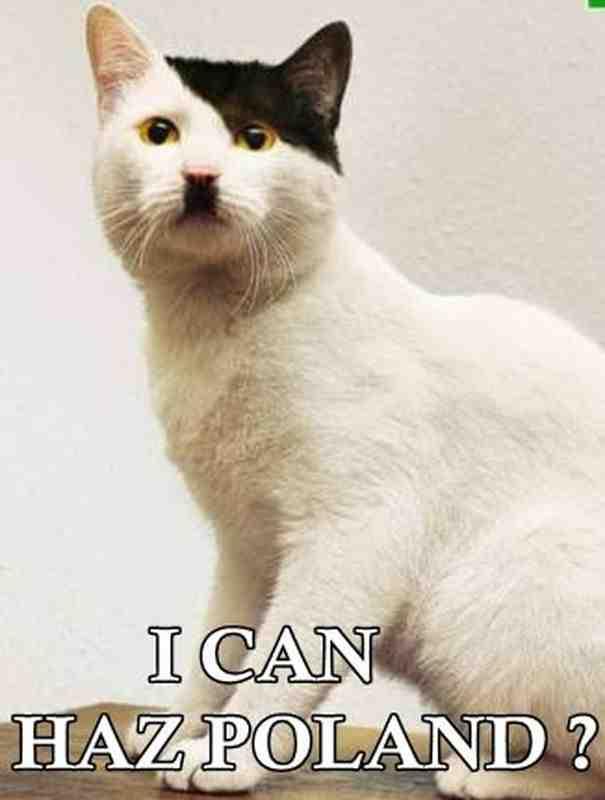 [Image: Hitler-Cat.jpg]