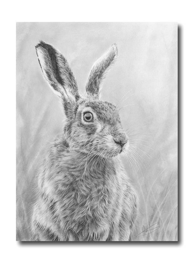 Hare Pencil Drawings New Hare Drawing '