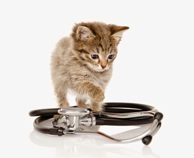 Five Most Common Illnesses in Cats