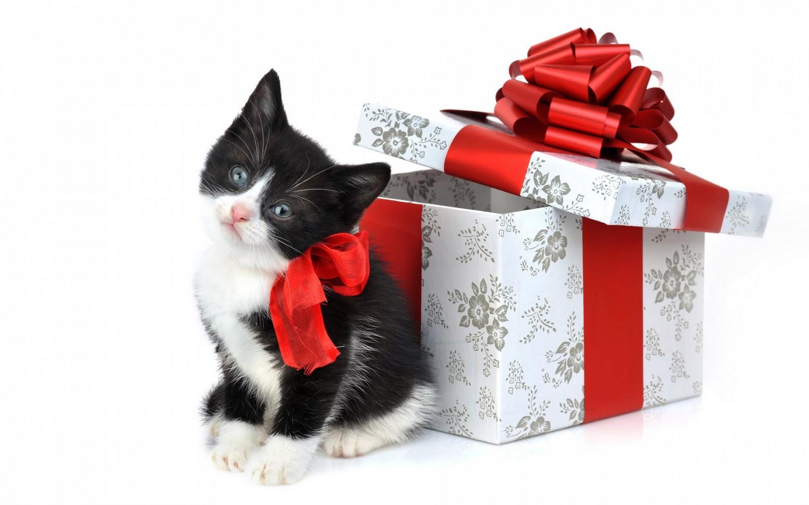 http://3.bp.blogspot.com/-7Td4fhniulQ/TuszDtwC2gI/AAAAAAAA43c/uR5bAMLb1Uk/s1600/Christmas+Wallpaper+04.jpg