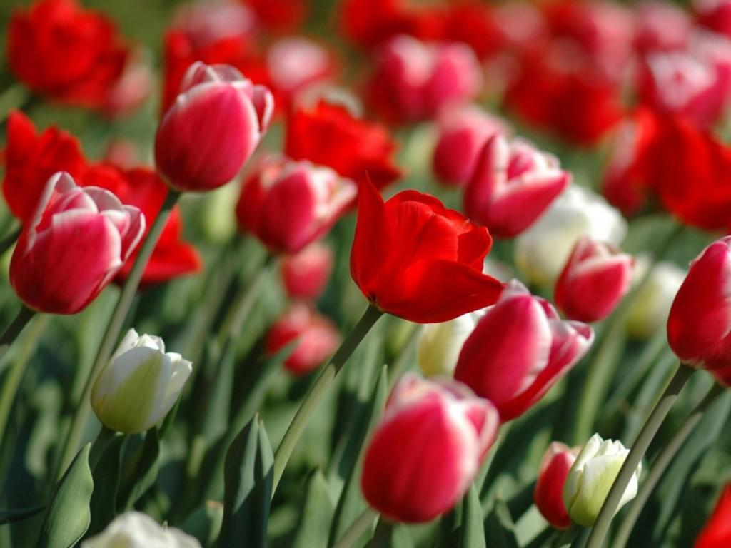 Media Untuk Sharing: Wallpaper Bunga