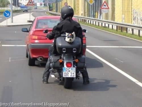Dog biker.