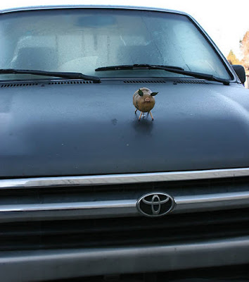 Hilarious Hood Ornaments Seen On www.coolpicturegallery.us