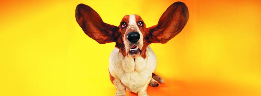 http://3.bp.blogspot.com/-7UnrZHf461s/T0z8HrT1h_I/AAAAAAAAATk/FmUGMJT11MM/s1600/funny-dog-wallpaper.jpg