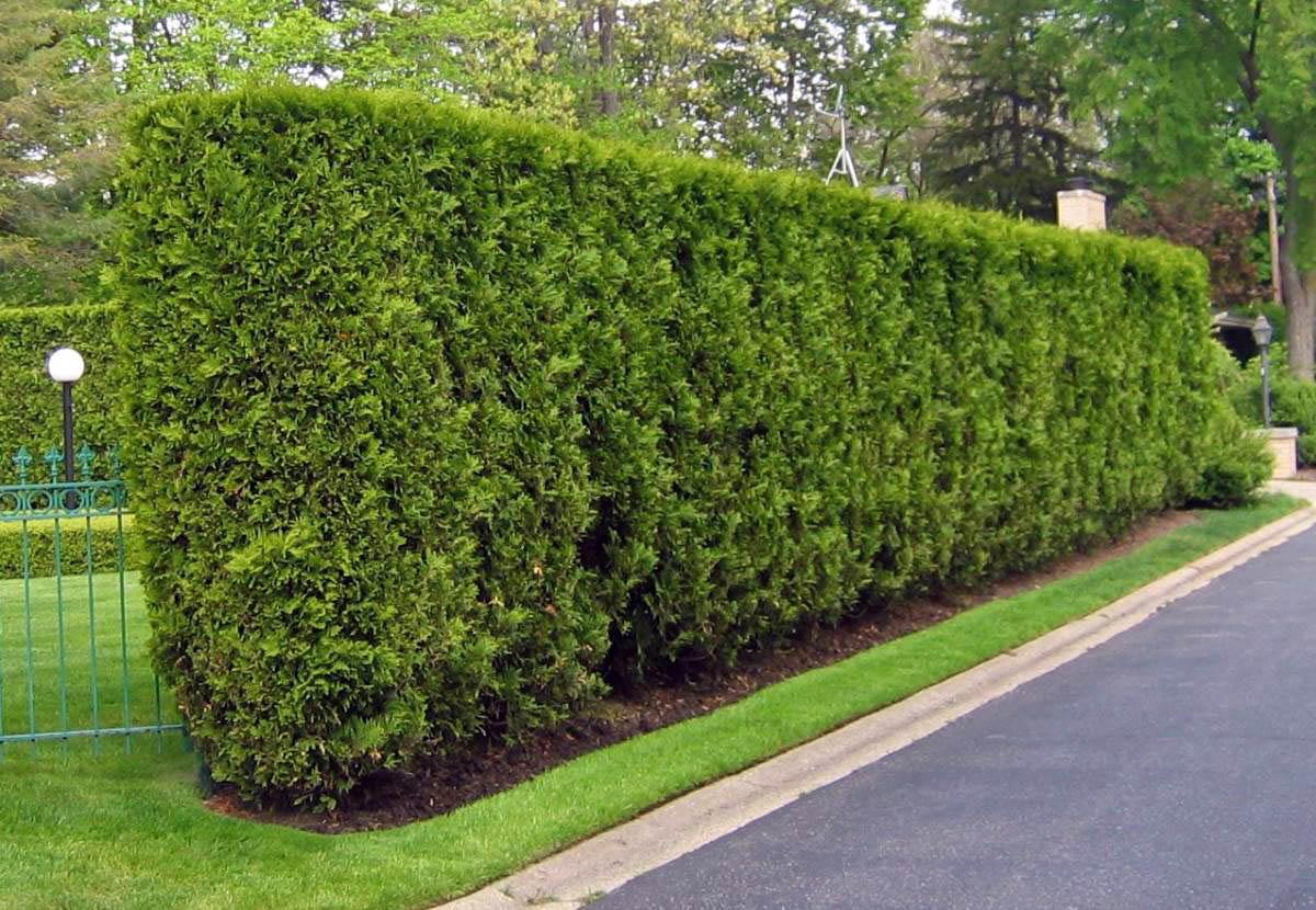 cerca para jardim alta : cerca para jardim alta:Enviar por e-mail BlogThis! Compartilhar no Twitter Compartilhar no