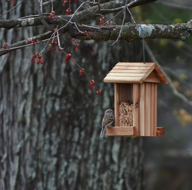 The Flying Clubhouse: Bird Feeder