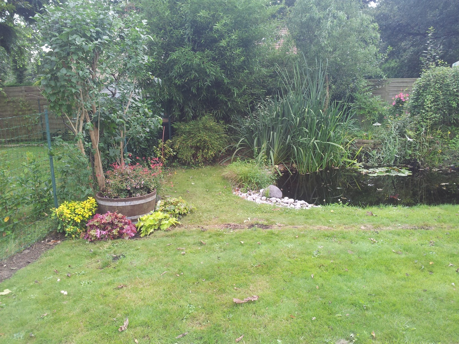 Mon petit bassin de jardin quoi de neuf au bassin - Petit bassin de jardin ...
