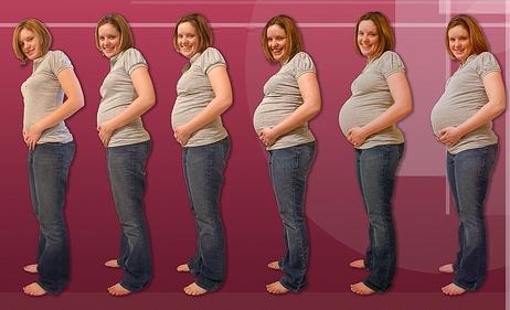 Etapas del embarazo para colorear - Imagui
