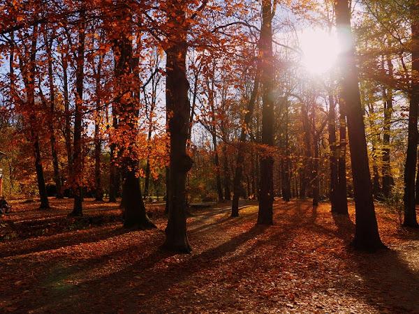 20. FOTOGRAFICZNIE. Park jesienią.