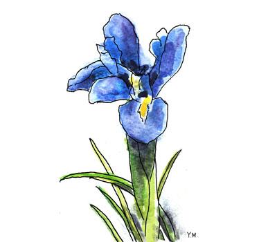 Iris by Yukié Matsushita
