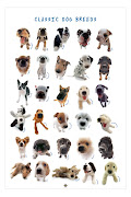 Dogs breeds dogs of the world