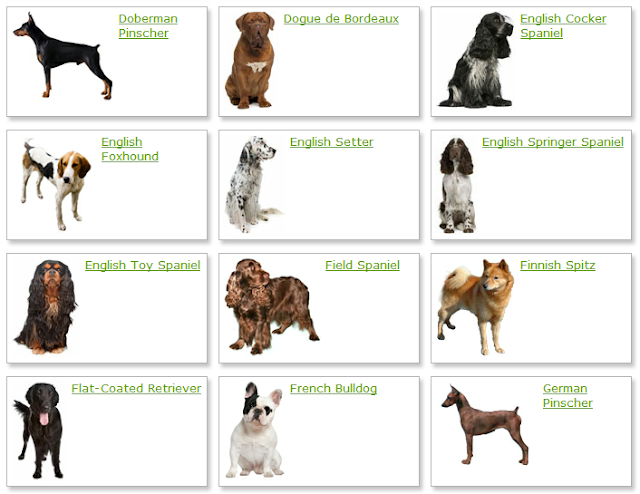 Best Small Game Hunting Dog Breeds