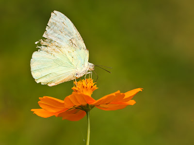 Butterfly towards its end of life