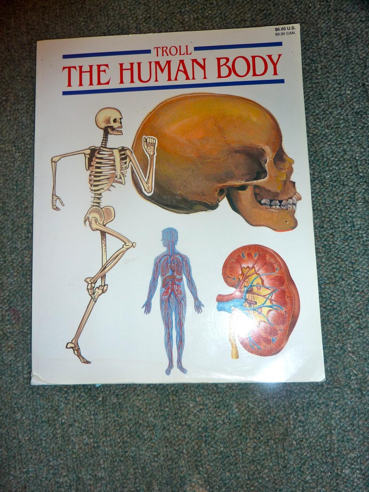 Human Anatomy Muscular System