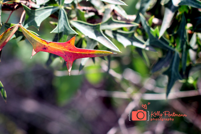 Quotes about change, Nature Photography, Kelly Portmann Photography