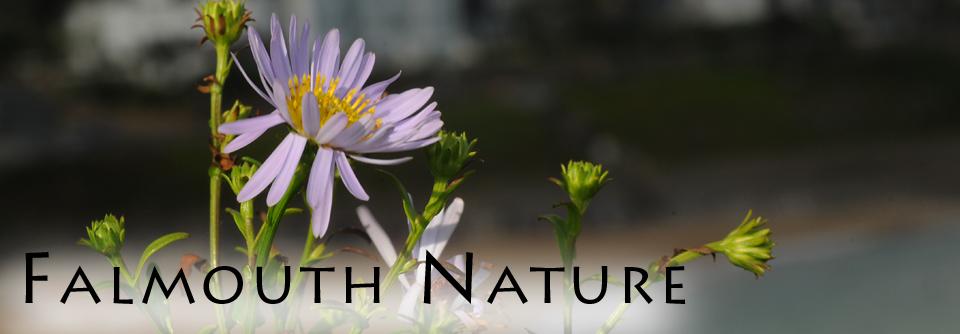 Falmouth Nature