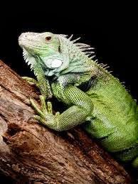 Las iguanas y las ardillas en el Inem saltarán de rama en rama.