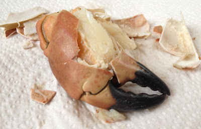 broken crab claw