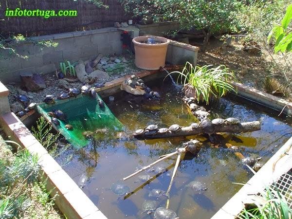 Estanques para tortugas de agua si nuestra tortuga for Como mantener el agua limpia de un estanque