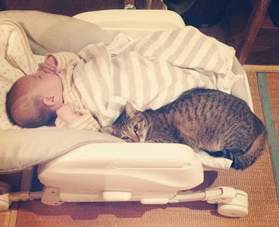 foto kucing bernama toco dan seorang bayi 04