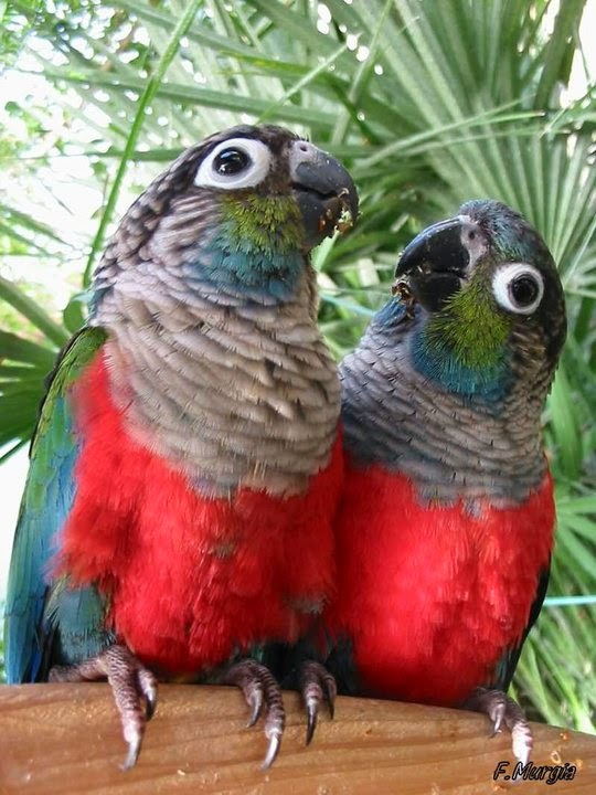 BIRD/PARROT CARE LINKS: