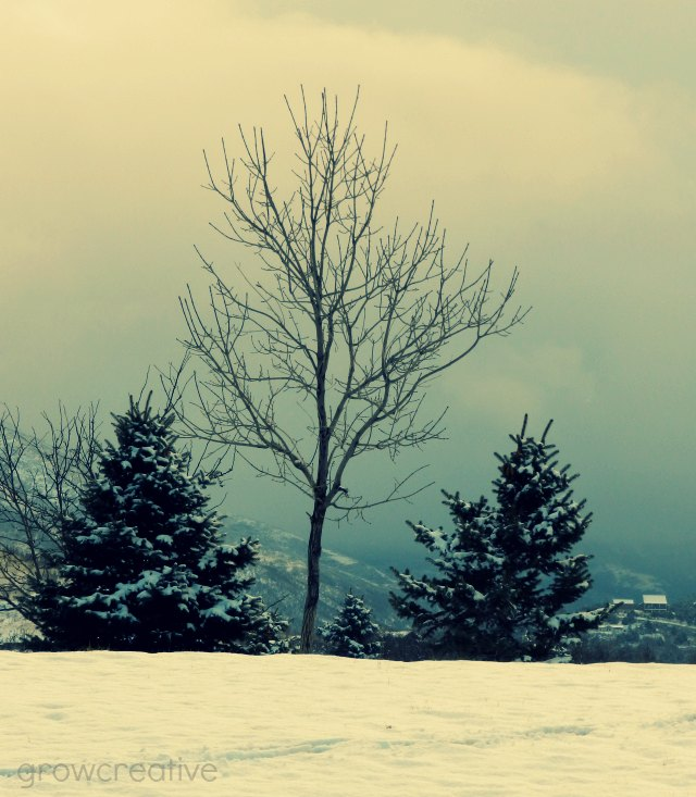 Winter PineTree Photography: Grow Creative
