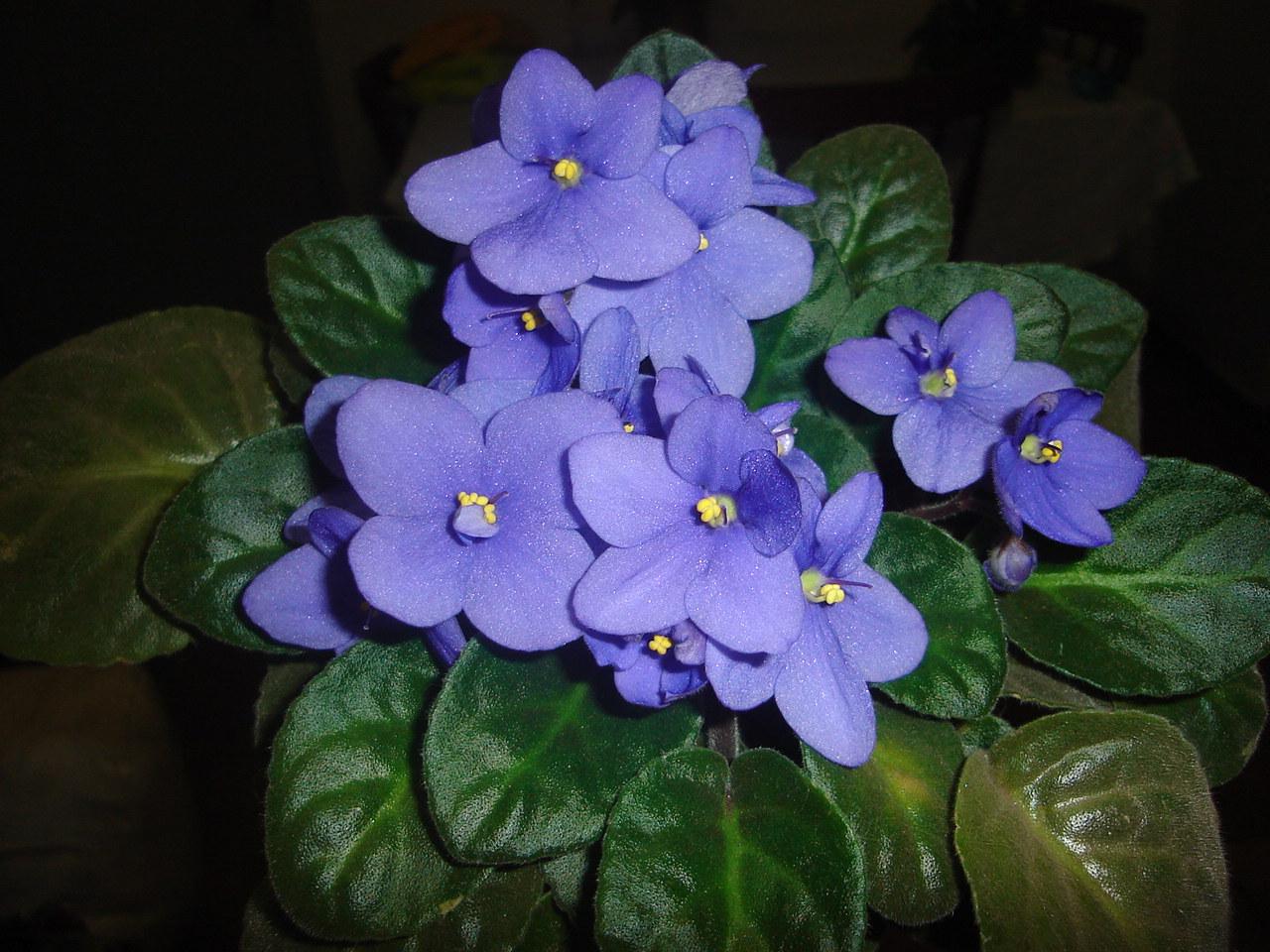Imagenes De Flores Violetas
