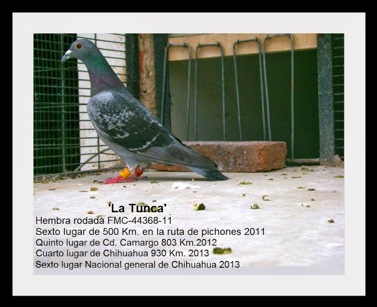 'La Tunca'