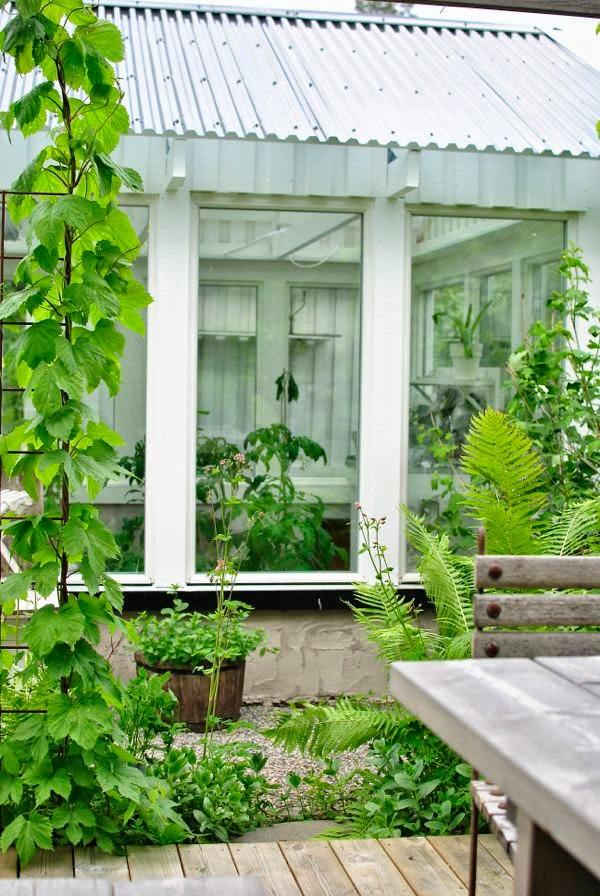 växthus pergola humle armeringsmatta