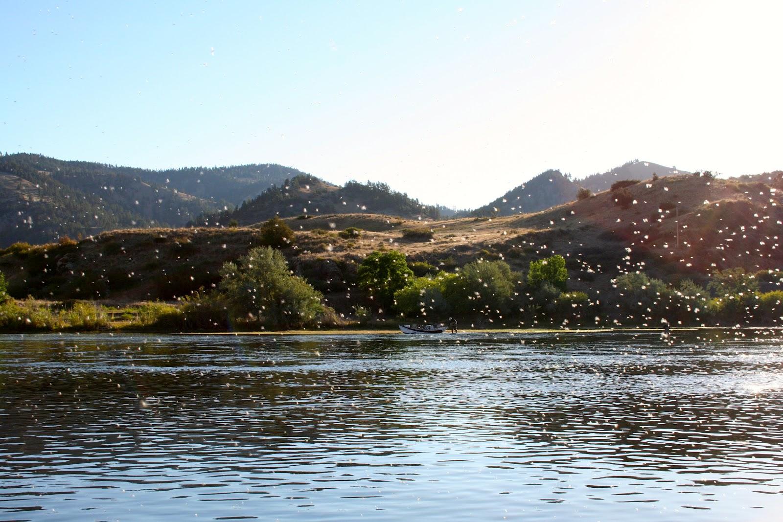 Whats next missouri river fly fishing montana for Missouri river fishing
