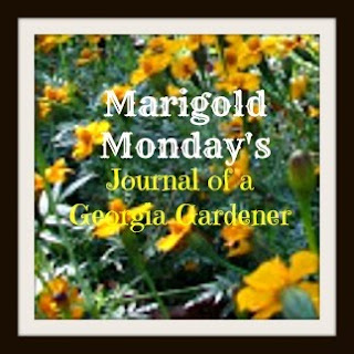 Marigold Mondays