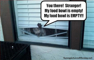 Food Bowl Empty Funny Talking Cat Caption