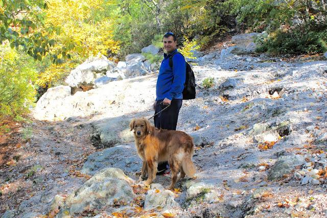 Hiking with your dog Lantern Hill dog friendly #walktober