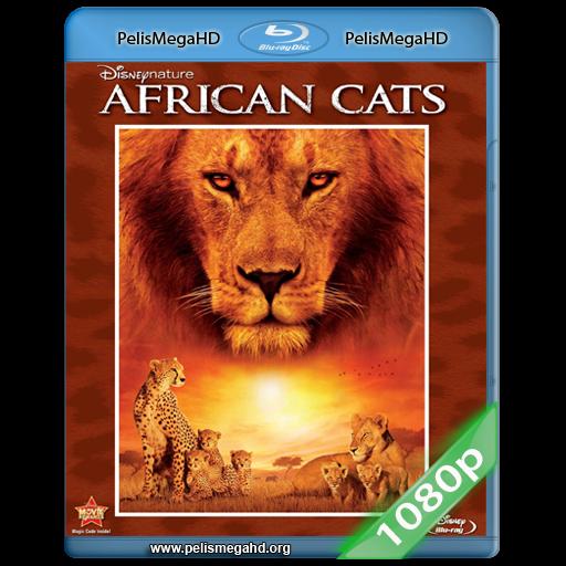 GRANDES FELINOS AFRICANOS: EL REINO DEL CORAJE (2011) FULL 1080P HD MKV ESPAÑOL LATINO