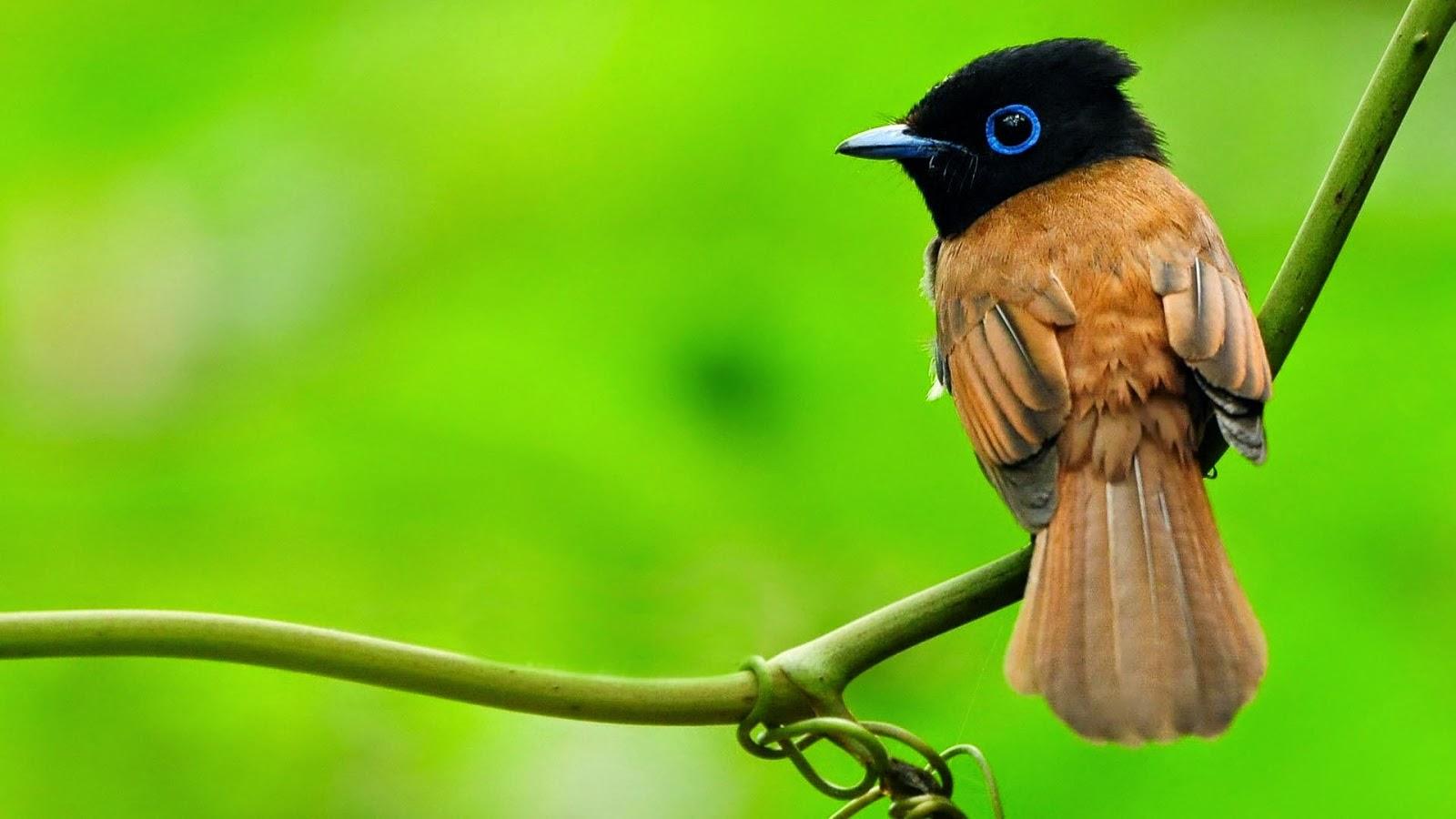 Beautiful Birds HD Wallpapers