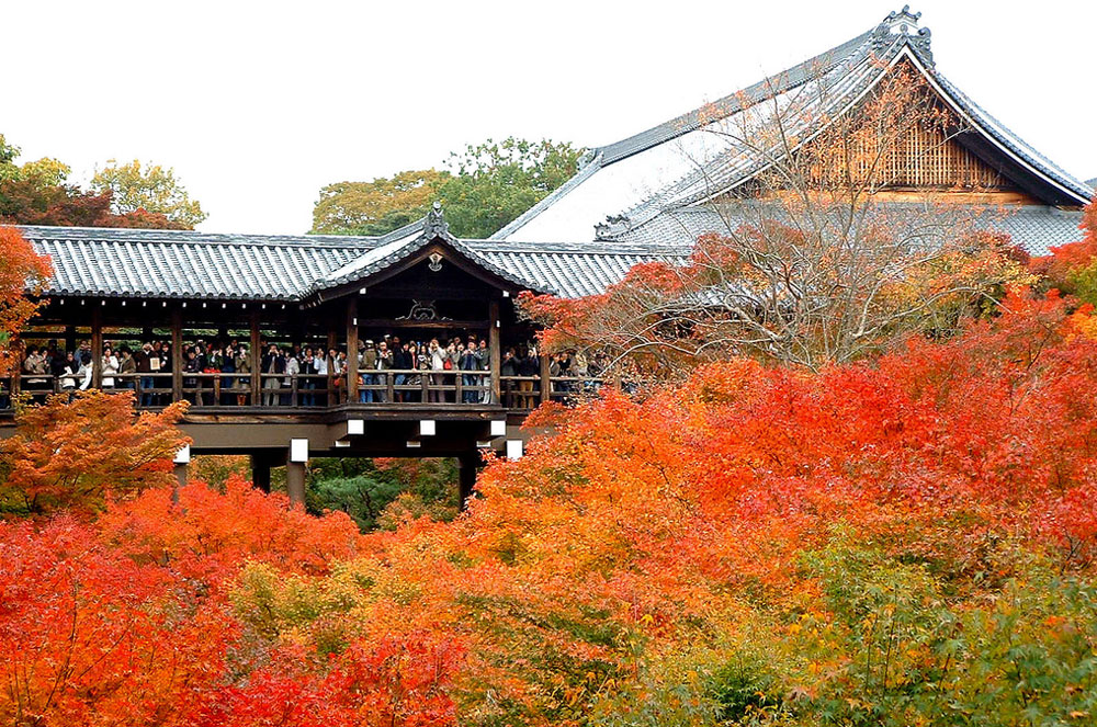 Discover a Miracle Japan you didnt Know: Tofukuji Temple Open for Public...