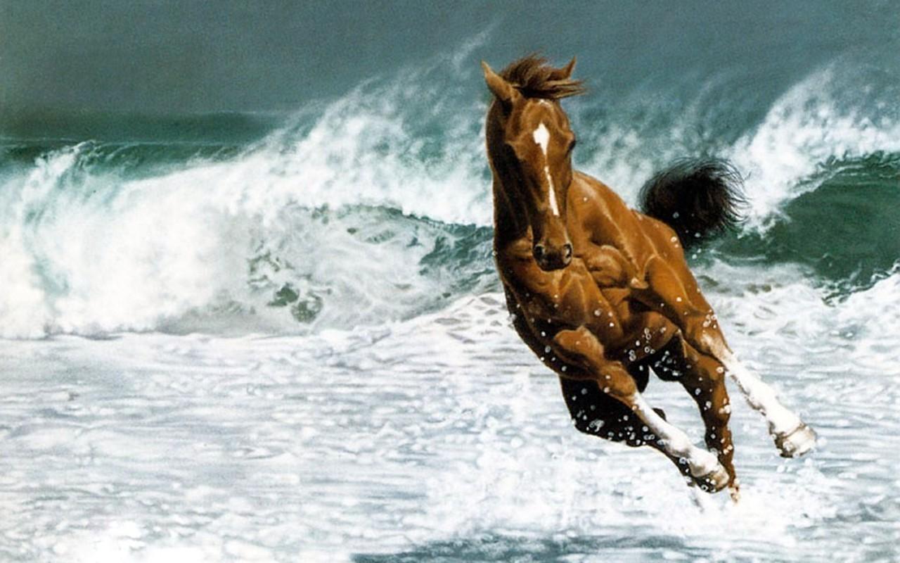 Most Inspiring   Wallpaper Horse Water - love+Beautiful-Horse-horses-22410583-1280-800  HD_349025.jpg