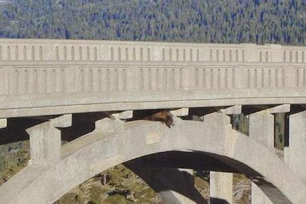 A Daring Bear Rescue from a Bridge (6 pics)