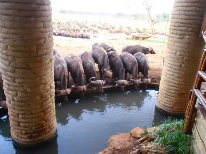 Sarova Salt Lick Lodge is a uniquely designed safari lodge in Kenya