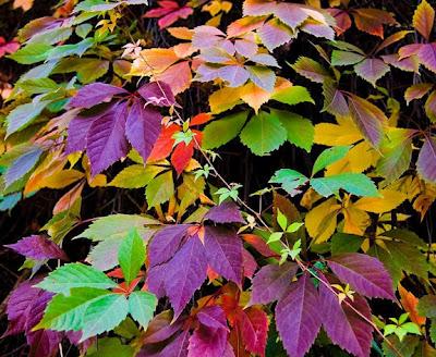 Mil colores en las hojas de otoño Fotografias de otoño