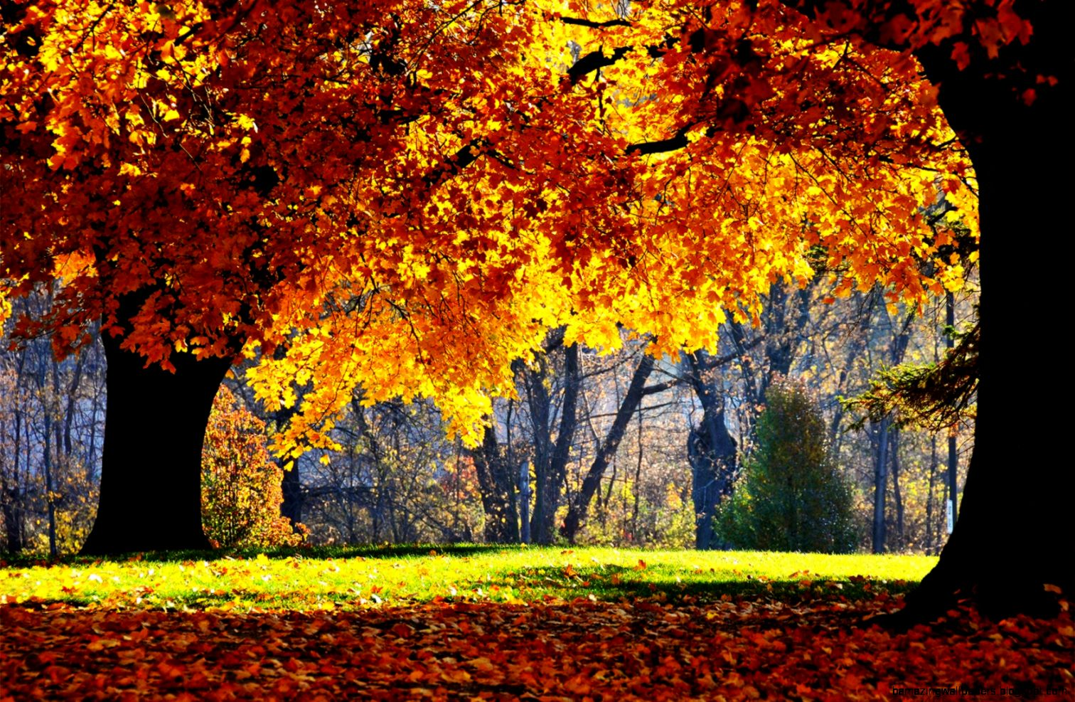 Autumn Wallpapers Download Group 85